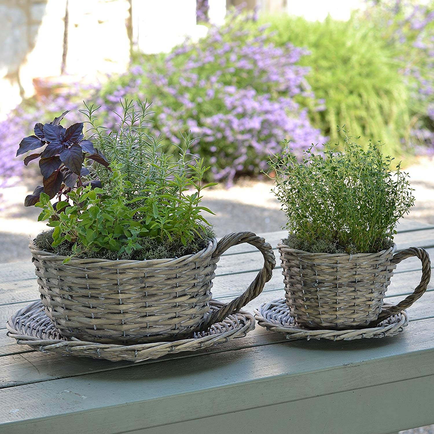 Plant Theatre 2 Willow Teacup Planters